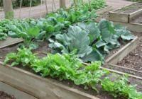 raised bed vegetable gardening uc master gardener program of