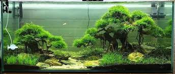 Aquascape Shop Aquascape Driftwood N Aquarium Exotic Plants Exotic Aquaristic