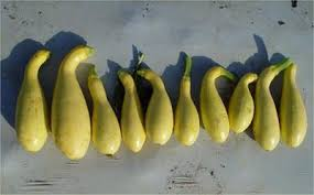 summer squash production nc state extension publications
