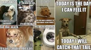 Dog Memes - hilarious and adorable dog memes guaranteed to put you in a good
