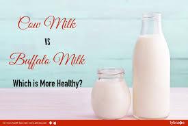 milk vs buffalo milk for toddler