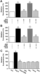 cellular antioxidant effects of atorvastatin in vitro and in vivo