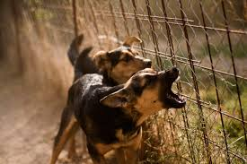 Causes Of Sudden Blindness In Dogs Causes Of Aggression In Dogs