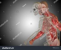 3d Head Anatomy Anatomy Concept 3d Illustration Human Man Stock Illustration