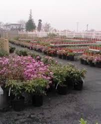 Nursery Plant Supplies by Horning U0027s Greenhouse Garden Center U0026 Nursery
