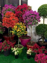 best 25 topiary trees ideas on topiaries tomato cage