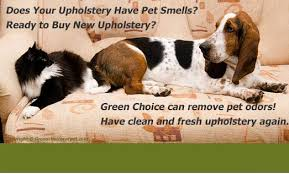 Where To Buy Upholstery Cleaner Upholstery Cleaning Bronx Furniture And Sofa Cleaning In Bronx