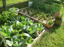kitchen garden design ideas vegetable garden design plans australia best idea garden