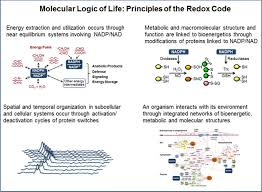 redox theory of aging implications for health and disease