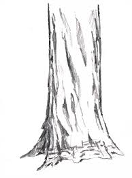 good drawing pics of a tree trunk coloring pages wallpaper