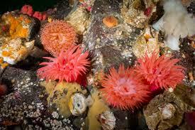 anemones flowers of the sea eiko jones photography