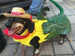 Corn Halloween Costume 50 Adorable Halloween Dog Costumes Vittles Vault
