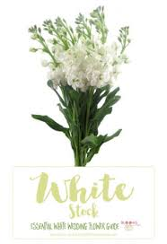 wedding flowers names white flowers names white wedding flowers guide types of white