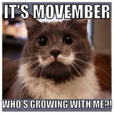 Mustache Cat Meme - internet cats with followings you ll never even come close to