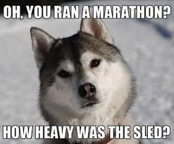 Oh You Dog Meme - do you know why this huskie is angry funnydogmemes funnymemes