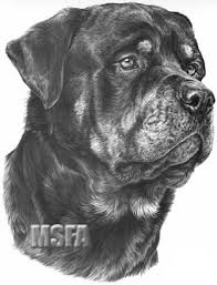 coloring nice rottweiler drawings draw dog coloring
