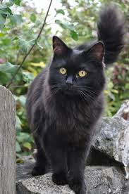 25 black kitty ideas black kittens cute
