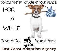 fosters application east coast adoption agency