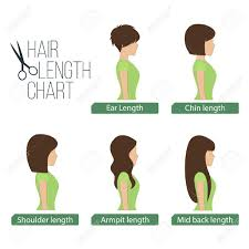 different hair hair length chart side view 5 different hair lengths royalty