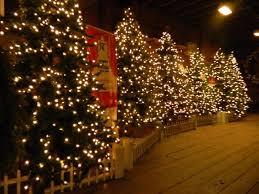 folsom zoo christmas lights 2017 dove christmas lights the best dove 2017