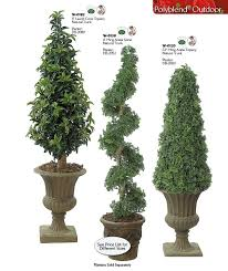 outdoor palm trees topiaries trees