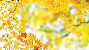 1920x1080 fall wallpaper wallpapers autumn leaves 83