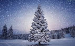 amb wallpapers provides you the snow winter trees wallpaper