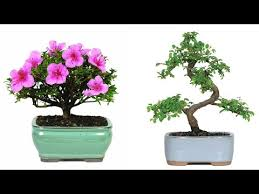 cheap top 100 trees find top 100 trees deals on line at alibaba