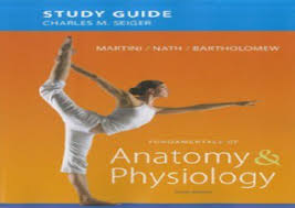 Study Guide Anatomy And Physiology 1 Manatee Anatomy And Physiology
