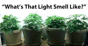 light and plant growth colored lights plant growth coolman club