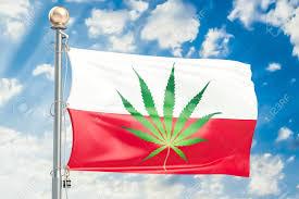 Colorado Flag Marijuana 653 Marijuana Laws Stock Vector Illustration And Royalty Free