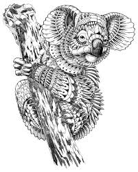 koala bear coloring page 4959 best coloring pages images on pinterest coloring books