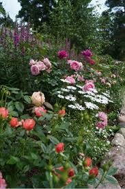 857 best dream garden images on pinterest flower gardening