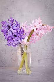 Vase Deco Free Images Blossom Petal Glass Vase Decoration Close