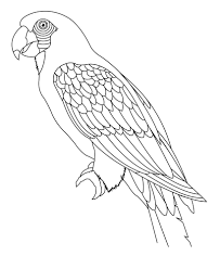 holiday coloring pages coloring pages birds free printable