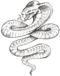 snake designs the is a canvas
