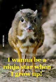 Deer Meme - water chevrotain mouse deer meme quite hilarious 9gag