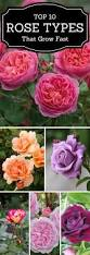 Types Of Planting Flowers - top 10 types of roses you would love to have in your garden