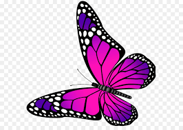 butterfly pink and purple transparent png clip art image free
