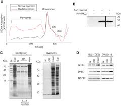 transfer rnas mediate the rapid adaptation of escherichia coli to