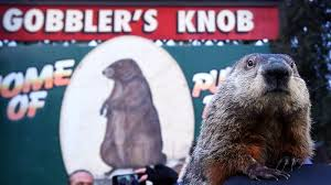 groundhog day 2017 punxsutawney phil sees his shadow the two