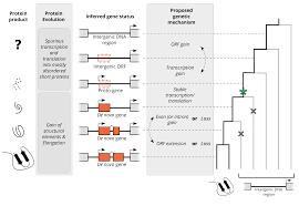 research bornberglab bioinformatics at the ieb