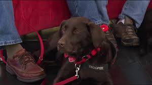 b c service dogs help canadian veterans with ptsd watch news