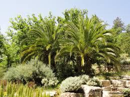 deborah u0026 the palm tree god as a gardener