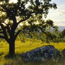 bailey tree company 67 photos 159 reviews tree services