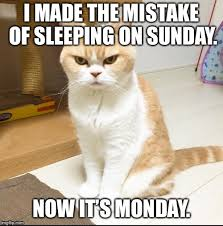 Grumpy Cat Sleep Meme - sleep on sunday meme imgflip