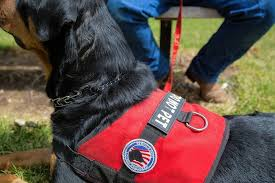 Comfort Pet Certification Constable Is That Dog A Service Animal A Pet Or None Of Your