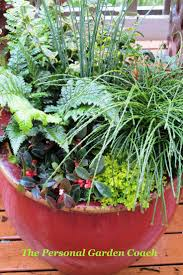 35 best winter container ideas images on pinterest winter