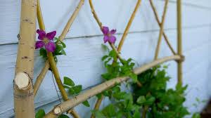diy willow branch trellis garden answer youtube
