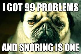Funny Pug Memes - funny pug snoring meme funny pug pictures